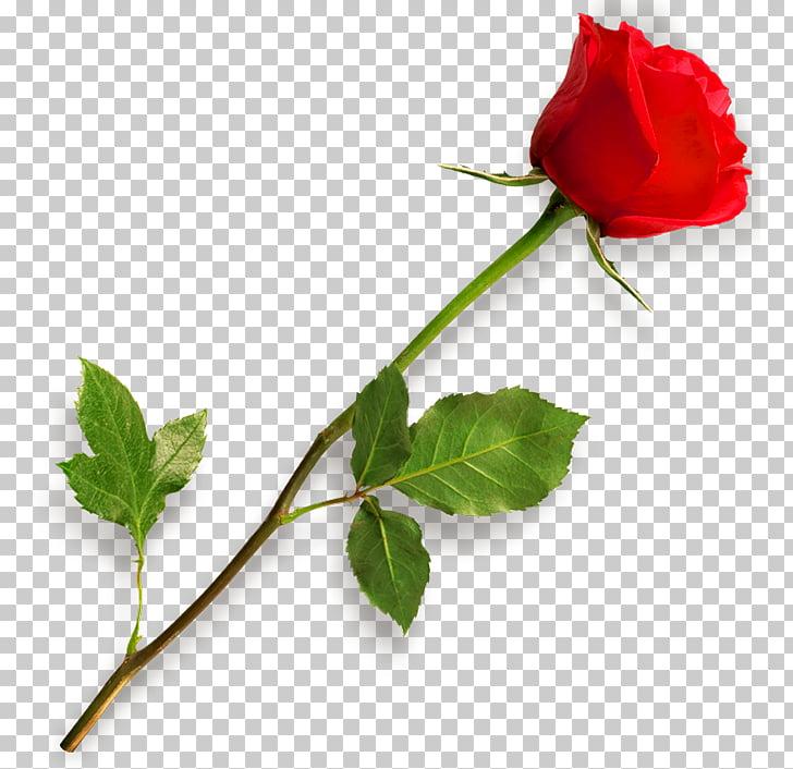 rose-clip-art-rose.jpg