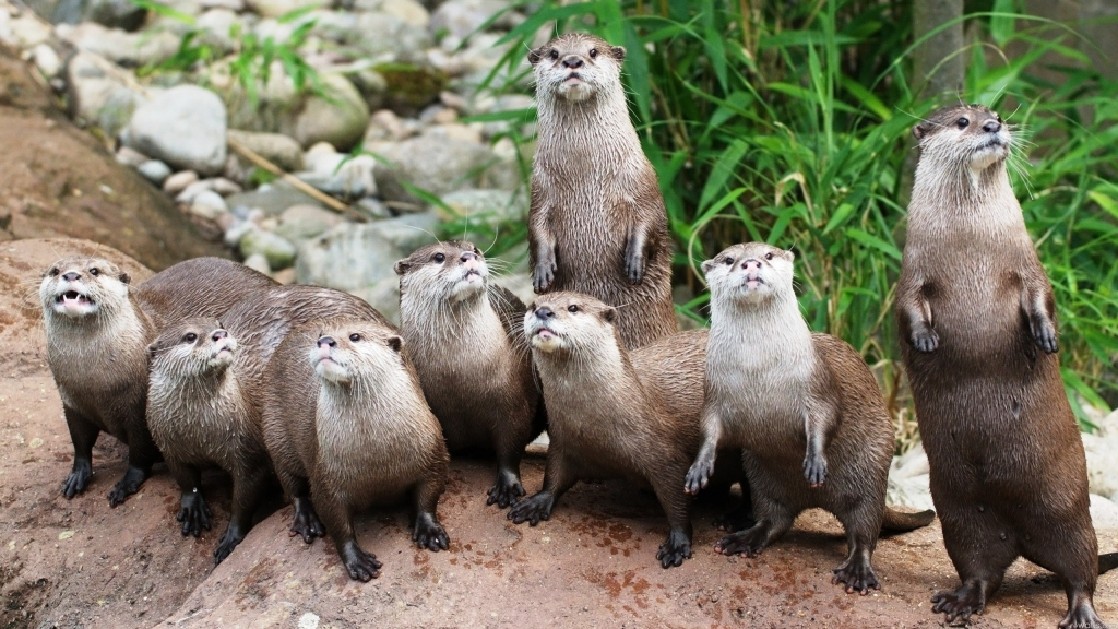 Animals___Rodents_The_family_of_otters_081505_.jpg